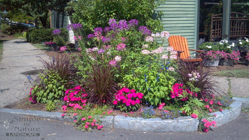 annual perennial garden design for nh landscapes